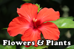category-flowers-plants.fw_
