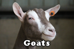 category-goats.fw_