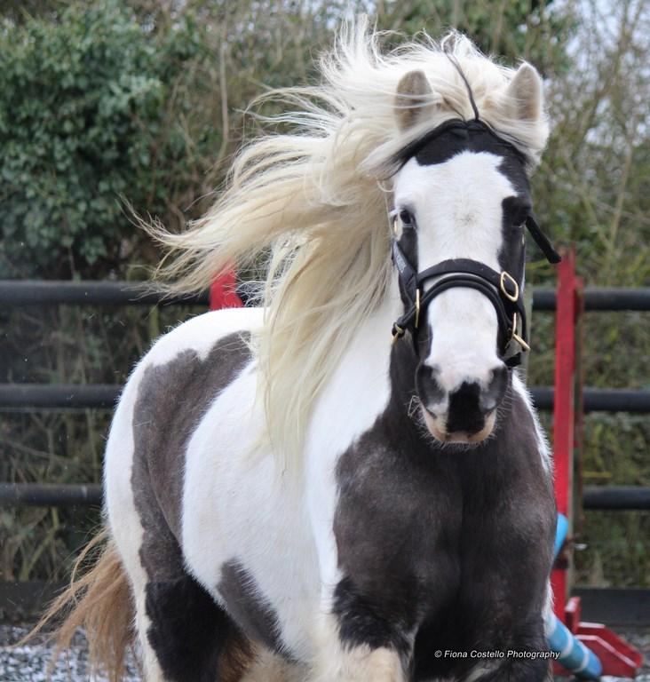 horse-wellieson