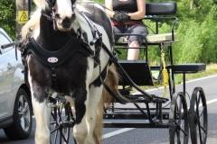 horse&carriage-abberton