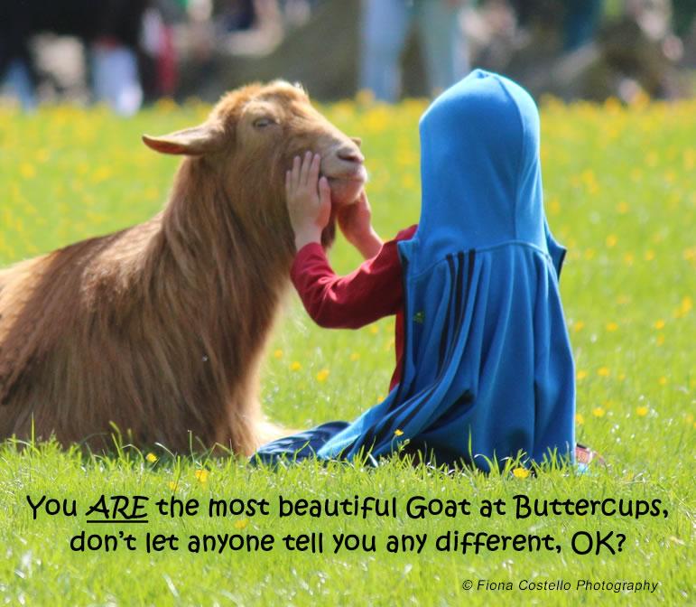goat&child