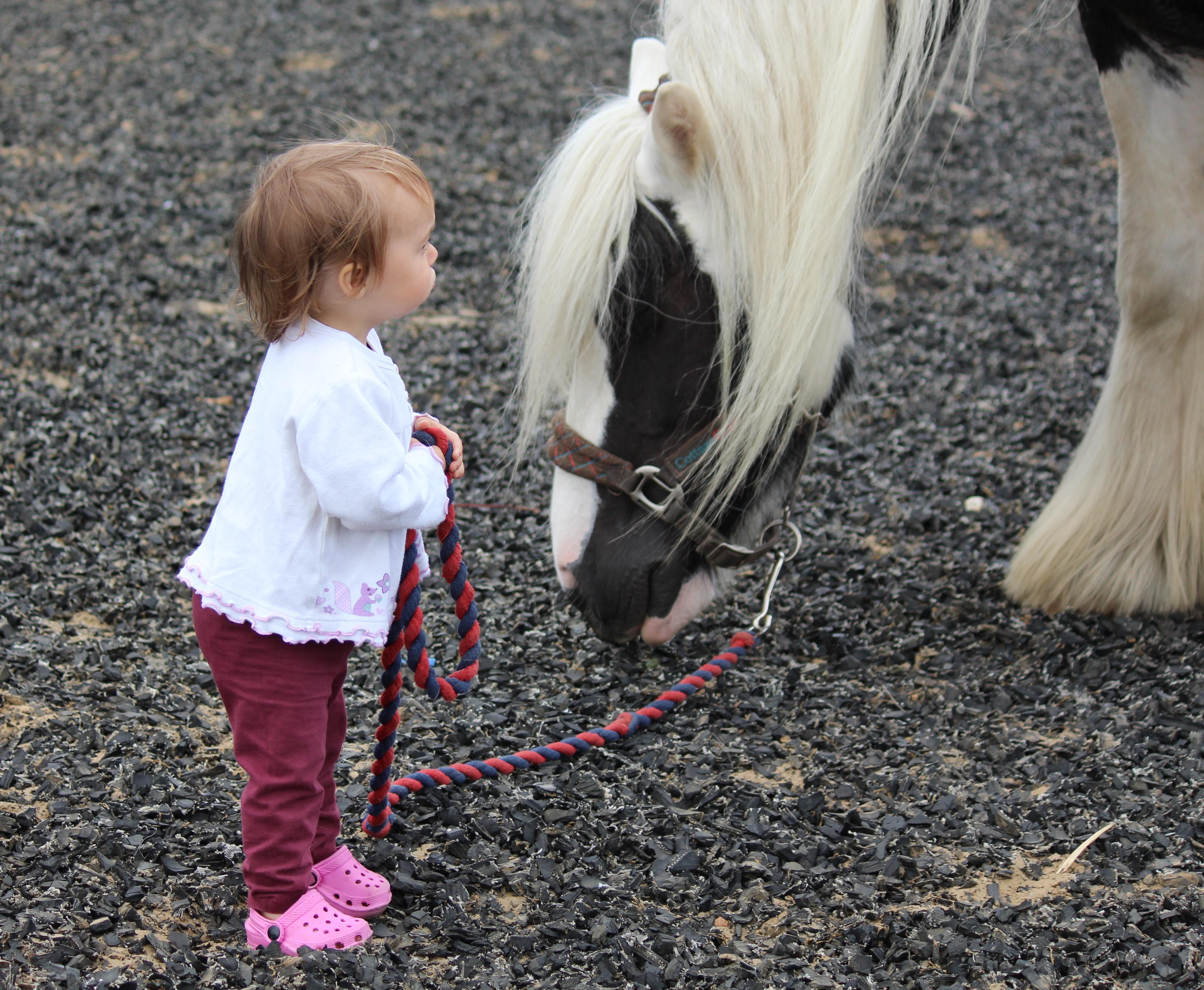 marli-horse
