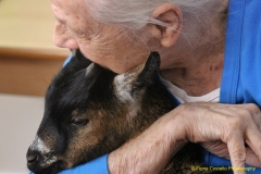 Goat-Therapy