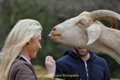 Goat&Friend