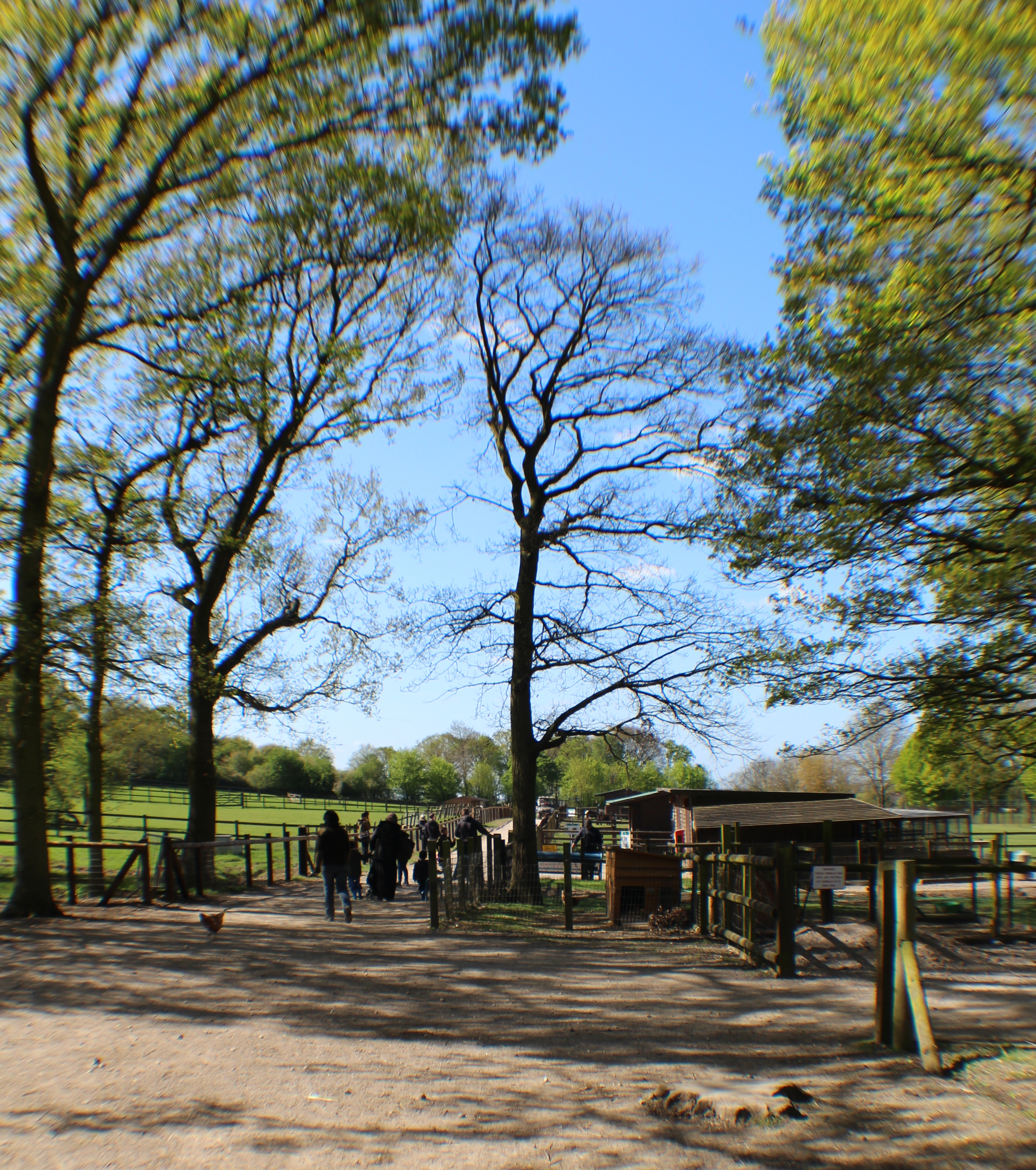 hainault-country-park